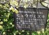 0320_10hiugamizuki2