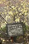 0322hiugamizuki2