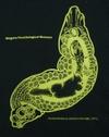 0524neodactylodiscus_latimeris