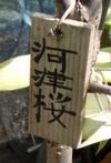 0226_2kawadu5
