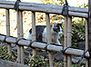 0221_9cat