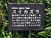 0514_4suikazura3