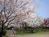 0404k_kamogawa2