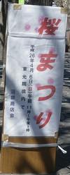 0322_3sakura4