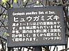 0316_4hyugamizuki2