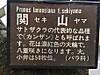 0406_16yaezakura3
