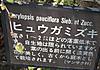 0315w_18hiugamizuki1