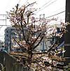 0221_17kawadu