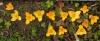 0214_12croccus2